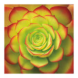 Fiery Succulent Print by Jan Bell
