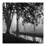 Woodland No. 1 Prints by Nicholas Bell