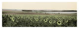 Andalusian Sun Flowers Print by Alan Blaustein