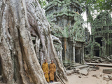 Cambodia, Siem Reap, Angkor, Ta Prohm Temple Photographic Print by Steve Vidler