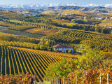 Vineyards, Nr Alba, Langhe, Piedmont (or Piemonte or Piedmonte), Italy Photographic Print by Peter Adams