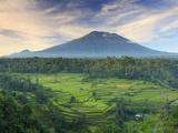Michele Falzone - Indonesia, Bali, Redang, View of Rice Terraces and Gunung Agung Volcano Fotografická reprodukce