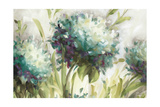 Hydrangea Field Premium Giclee Print by Lisa Audit