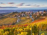 Peter Adams - Vineyards, Treiso, Nr Alba, Langhe, Piedmont (or Piemonte or Piedmonte), Italy Fotografická reprodukce