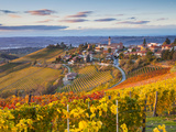 Vineyards, Treiso, Nr Alba, Langhe, Piedmont (or Piemonte or Piedmonte), Italy Lámina fotográfica por Peter Adams