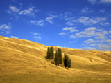 Lombardy Poplar Trees, New Zealand Rural Landscape, Hawkes Bay, New Zealand, Pacific Ocean Photographic Print by Neil Farrin