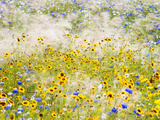 Wildflowers, London, UK Photographic Print by Nadia Isakova