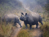 Nepal, Chitwan National Park, Rhino (Rhinoceros Unicornis) Photographic Print by Michele Falzone