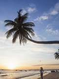 Vietnam, Mui Ne, Mui Ne Beach, Palm Trees at Sunset Photographic Print by Steve Vidler