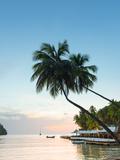 Caribbean, St Lucia, Marigot, Marigot Bay, Marigot Bay Beach Club Hotel, Doolittle's Restaurant Photographic Print by Alan Copson