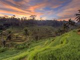 Indonesia, Bali, Ubud, Ceking Rice Terraces Photographic Print by Michele Falzone
