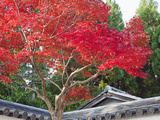Japan, Kyoto, Arashiyama, Autumn Leaves Photographic Print by Steve Vidler