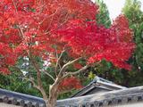 Japan, Kyoto, Arashiyama, Autumn Leaves Photographic Print by Steve Vidler
