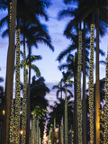 USA, Florida, Palm Beach, Palms on Royal Palm Way Photographic Print by Walter Bibikow