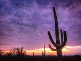 USA, Arizona, Tucson, Saguaro National Park Photographic Print by Michele Falzone