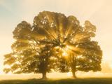 Sunrise, Usk Valley, South Wales, UK Fotodruck von Peter Adams