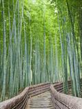 Japan, Kyoto, Arashiyama, Adashino Nembutsu-ji Temple, Bamboo Forest Fotografisk tryk af Steve Vidler