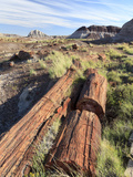 USA, Arizona, Holbrook, Petrified Forest National Park, Petrified Wood on Long Logs Trail Photographic Print by Michele Falzone