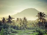 Indonesia, Bali, East Bali, Amlapura, Rice Fields and Gunung Agung Volcano Fotografisk tryk af Michele Falzone