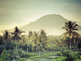 Indonesia, Bali, East Bali, Amlapura, Rice Fields and Gunung Agung Volcano Photographic Print by Michele Falzone