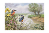 Kingfishers on the Riverbank Giclee Print by Carl Donner