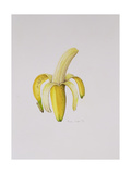 A Half-Peeled Banana, 1997 Giclee Print by Alison Cooper