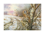 Tawny Owl Giclee Print by Carl Donner