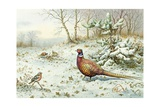 Cock Pheasant and Chaffinch Giclee Print by Carl Donner