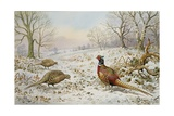 Pheasant and Partridges in a Snowy Landscape Reproduction procédé giclée par Carl Donner