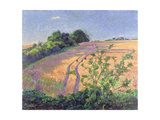 Golden Summer Giclee Print by Robert Tyndall