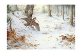 Snipe in Wooded Landscape Giclee Print by Carl Donner