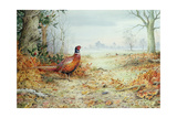 Cock Pheasant Giclee Print by Carl Donner