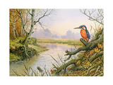 Kingfisher: Autumn River Scene Giclee Print by Carl Donner