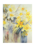 Mixed Daffodils in a Tank Giclee Print by Karen Armitage
