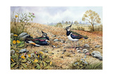 Lapwing Family with Goldfinches Giclee Print by Carl Donner