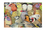 Patchwork-Birds, 1995 Giclee Print by  Ditz