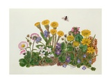 Purple and White Violets, Daisy, Celandine and Forget-Me-Not Giclee Print by Ursula Hodgson