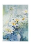 Marguerites, Alexandria Giclee Print by Karen Armitage