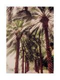 Palmtree, 2002 Giclee Print by Jeanette Korab