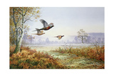 Pheasants in Flight Giclee Print by Carl Donner