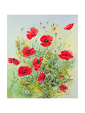 Poppies and Mayweed Giclee Print by John Gubbins