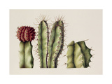 Cacti, 1999 Giclee Print by Annabel Barrett