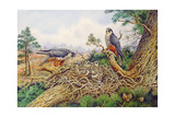 Hobbys at their Nest Giclee Print by Carl Donner