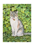 Ivy Giclee Print by  Ditz