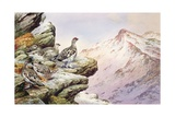 Ptarmigan on the High Tops Giclee Print by Carl Donner