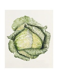 Savoy Cabbage Giclee Print by Alison Cooper
