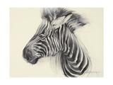 Baby Zebra  2000