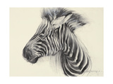 Baby Zebra, 2000 Giclee Print by Odile Kidd