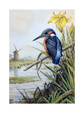 Kingfisher with Flag Iris and Windmill Giclee Print by Carl Donner