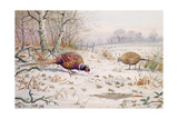 Pheasant and Partridge Eating Giclee Print by Carl Donner